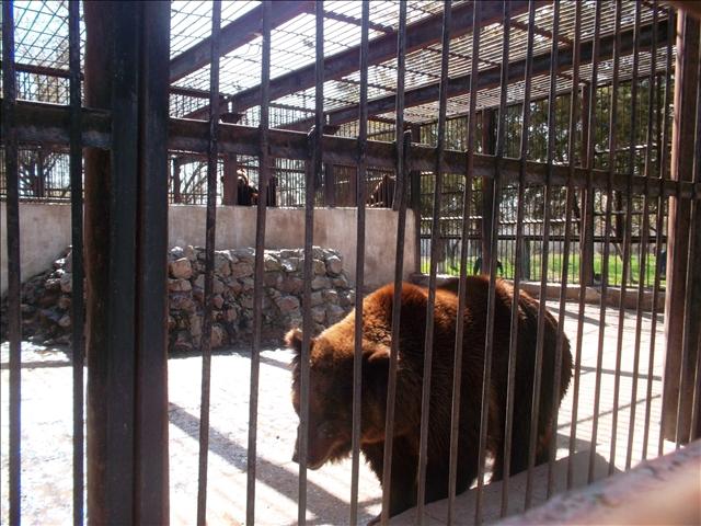 Медведица съела медвежат испугавшись грохота салютов в зоопарке Шымкента