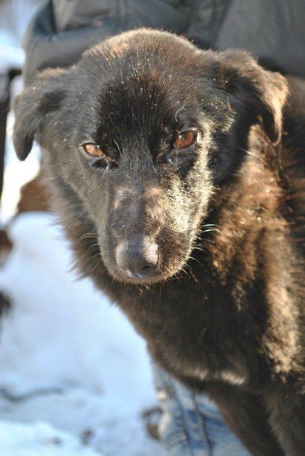 Выручать собак из беды спасателям приходится довольно часто