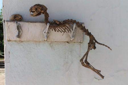 Теперь ученые музея определят, что это за существо