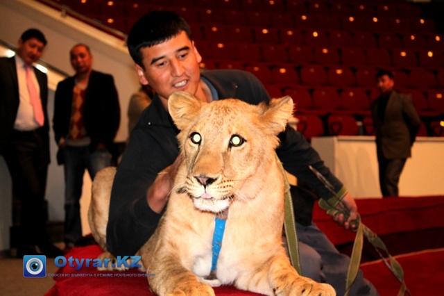 """Годовалый лев по кличке """"Назим"""" на фото вместе с дресировщиком"""