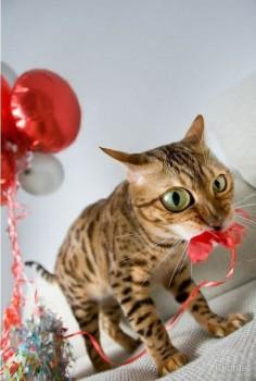 Коты просто обожают Новый год, а елка и украшения для них - самый вожделенный подарок