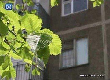 Неизвестные жуки уничтожают деревья в Шымкенте