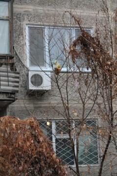 """Деревья у домов больше напоминают мусорные елки - """"украшения"""" говорят сами за себя"""