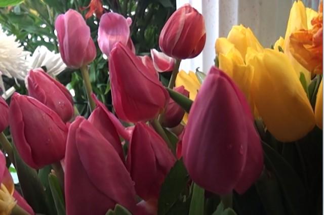 Тюльпаны хоть и замерзшие но все же есть на прилавке