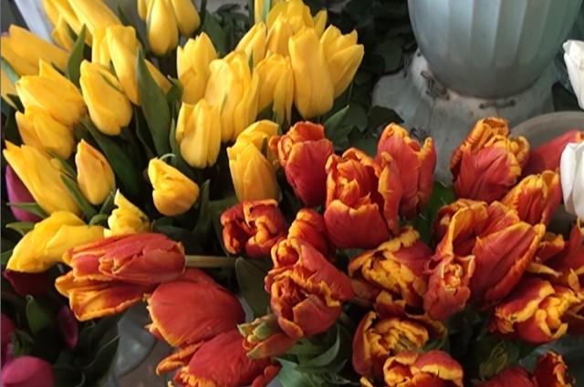 Весенние цветы для не весенней погоды