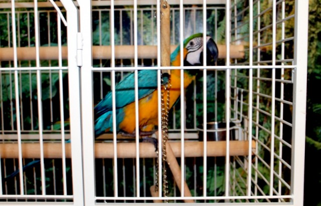 Говорящий попугай Абу в этот день был не в духе и говорить отказывался.