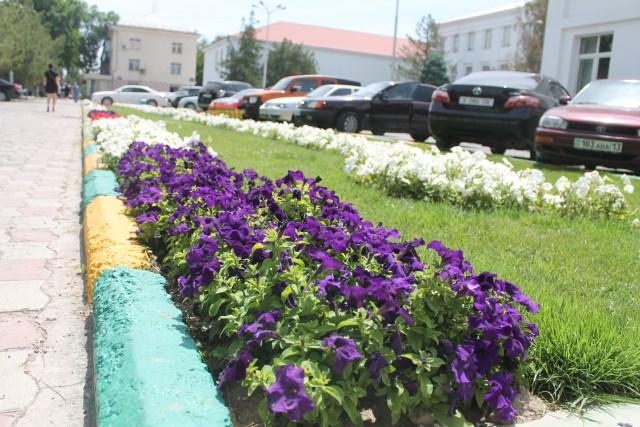 Петуньи - главные цветы Шымкента