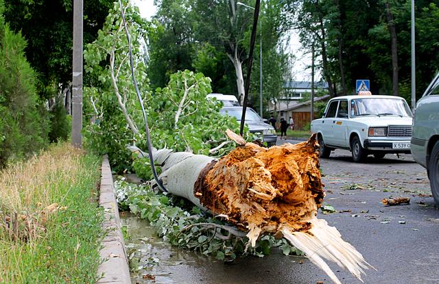 Вовремя прибытия съемочной группы к месту происшествия, дерево уже оттащили к обочине дороги