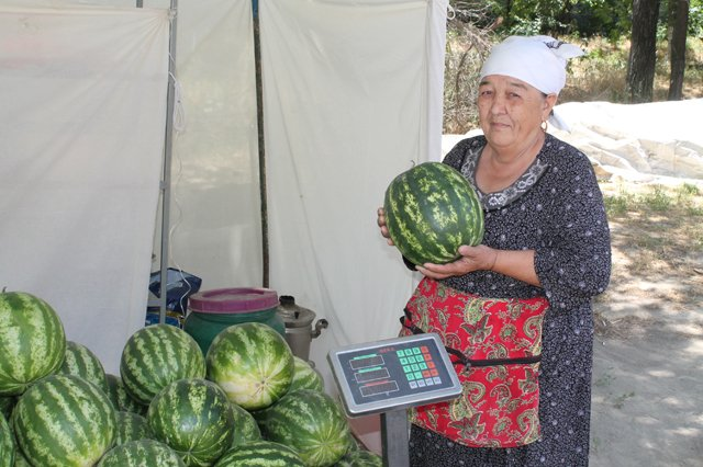 Пенсионерка из Ордабасинского района Сара Акбултанова торгует арбузами в Шымкенте уже больше 15 лет.