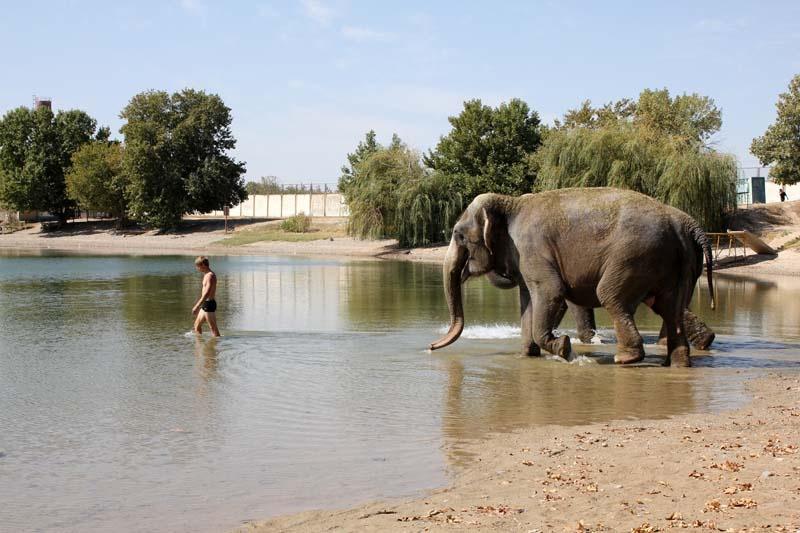 Сделала минет слону 13 фотография