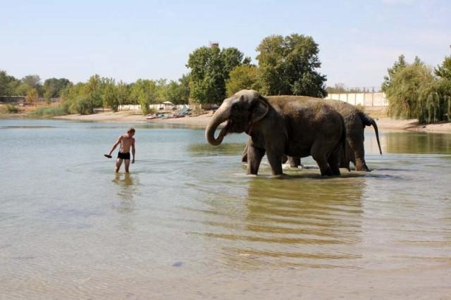 Сергею пришлось на пути слонов подбирать со дна пустые пластиковые и стеклянные бутылки. Такие вещи в воде могут быть опасны для животных