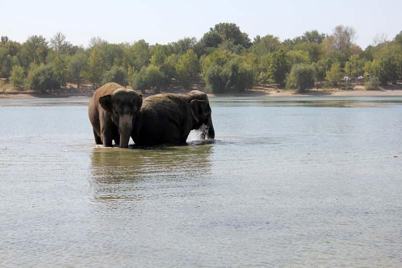 Сделала минет слону 27 фотография