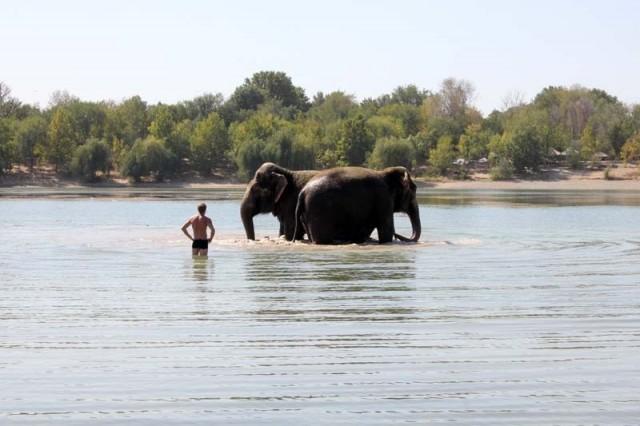 Купание - любимое занятие слонов. Таким способом дрессировщики благодарят Магду и Дженни за отличную работу во время гастролей в Шымкенте