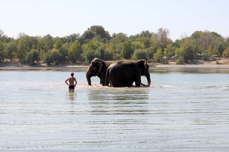 Сделала минет слону 7 фотография