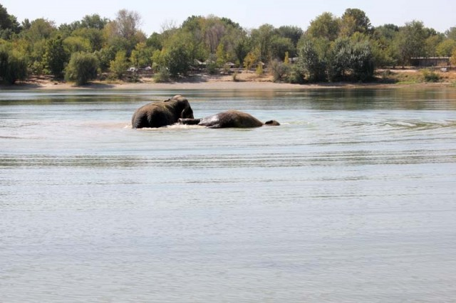 Слоны и ныряли, и кувыркались, и поливали себя и друг друга. Эти водные процедуры займут несколько часов, говорят дрессировщики.