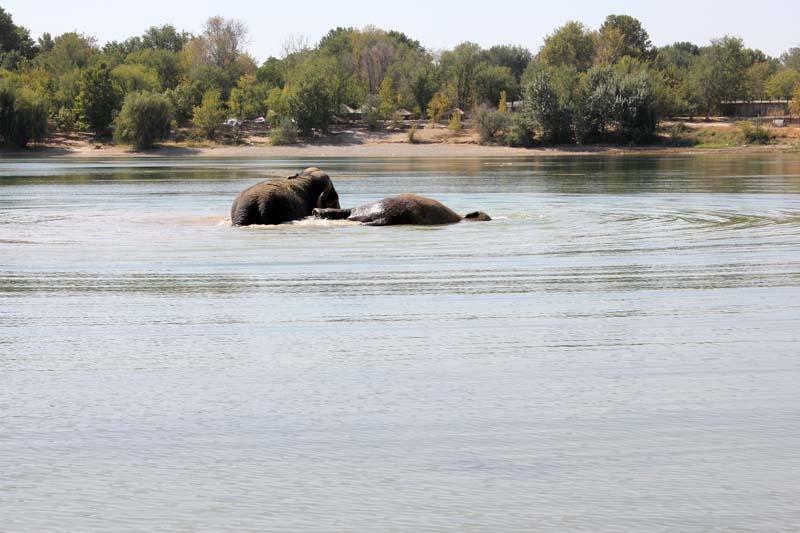 Сделала минет слону 9 фотография