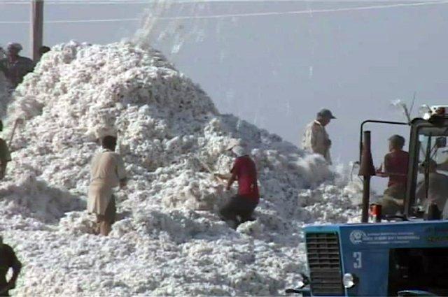 """Капельное орошение при выращивании хлопка, значительно увеличит сбор """"белого золота"""", уверены фермеры"""