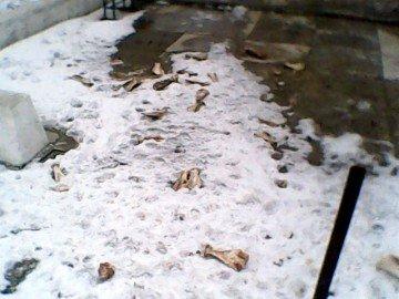 Несанкционированный скотомогильник появился здесь недавно, после того как снег на улицах стал таять