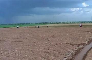 Сельхоз культурами будут засеяны 805 тысяч гектаров земли