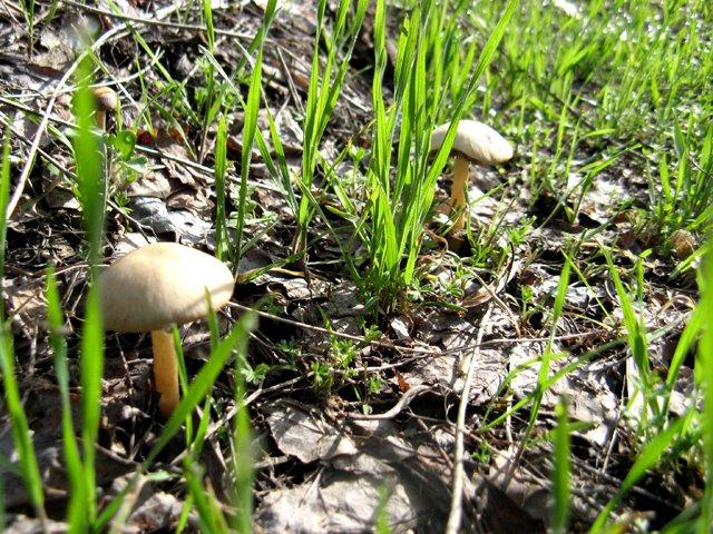 Природа полностью пробудилась. На полях появились грибы