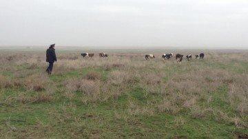 На пастбище хозяев скота полицейские так и не нашли