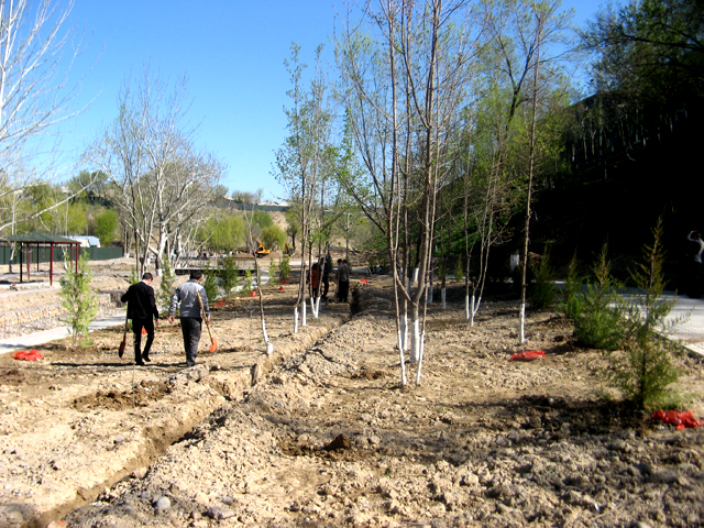 Всемирный день посадки леса шымкентцы отметили высадкой молодых саженцев