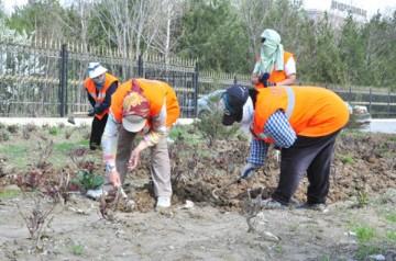 За все деревца, которые не прижились, ответственность несут организации, посадившие саженцы