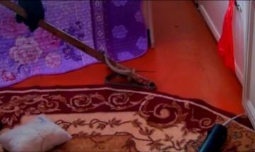 Змею выловили с помощью швабры