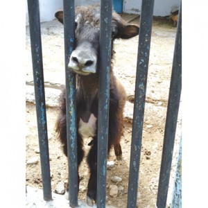 Шымкентский-зоопарк