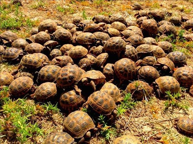 Всего было изъято 1330 контрабандных черепах