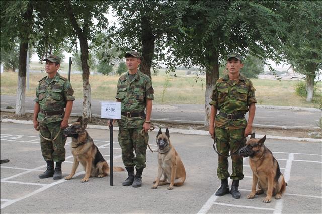 . В Шымкенте проходят соревнования на лучшего кинолога и лучшую служебную собаку, среди кинологических служб регионального командования Онтустик.