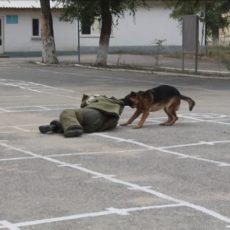Служебная собака бросается за нарушителем