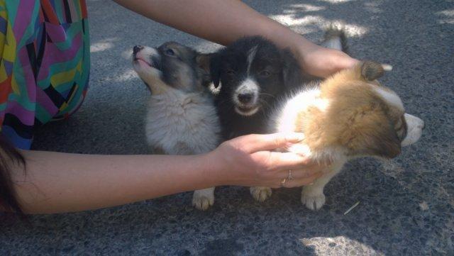 Три непоседливых щенка не хотели позировать для фото