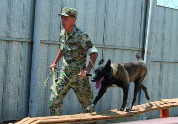 Если человеку не удалось по следам вычислить нарушителя, то на помощь приходит верный помощник пограничников – собака