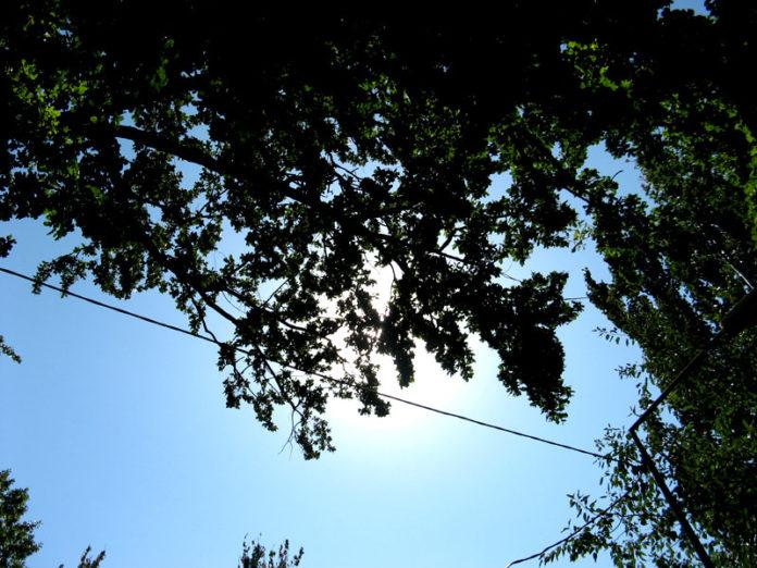 В Южном Казахстане на смену прохладе идет сильная жара