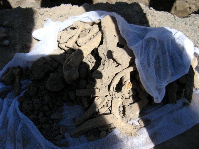 Человеческие останки перезахоронят в специально отведенном месте за мавзолеем Карашаш-Ана