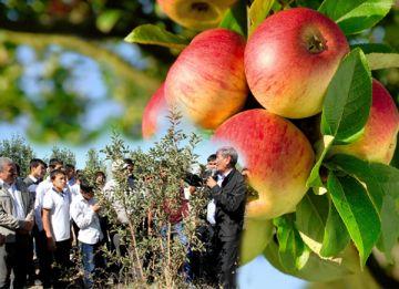 Управляющий крестьянским хозяйством «Жасыл аймак» Сапаргали Жунисов с гордостью показывает гостям свой питомник