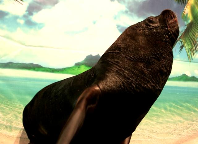 Гвоздем цирковой программы стал калифорнийский морской лев
