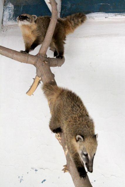 Экзотических животных в шымкентском зоопарке ждали давно