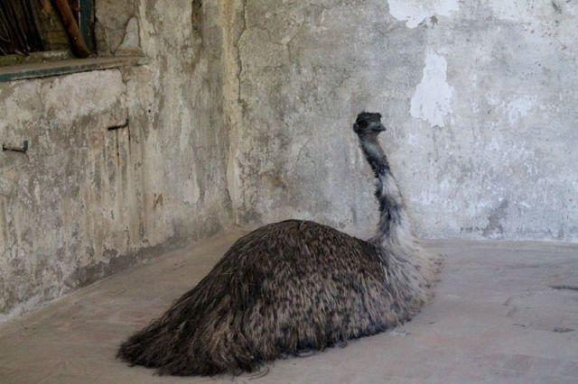 От всех животных смотрители зоопарка надеются получить потомство