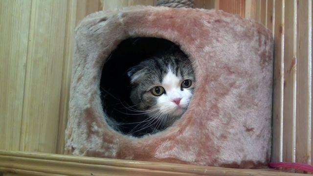 В Шымкенте появилась первая гостиница для животных