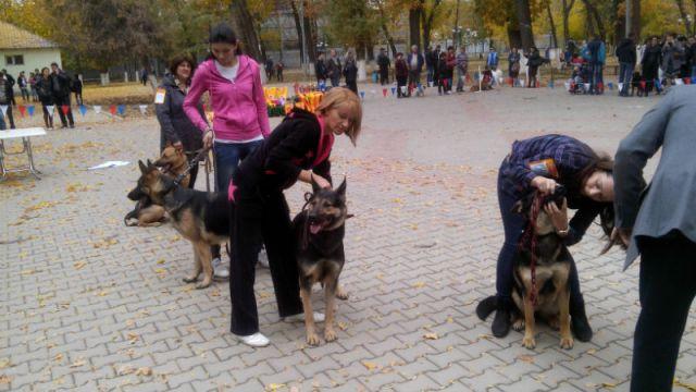 На этот раз своих питомцев продемонстрировали 110 собаководов юга
