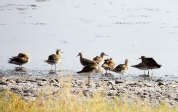 В бассейне озера Кызылколь зарегистрировано 216 видов птиц, что составляет 43% всей орнитофауны Казахстана