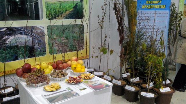 Гранаты, лимоны, бананы и киви, теперь эти экзотические фрукты выращивают в нашей области