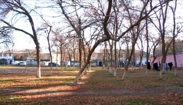 """В микрорайоне """"Нефтеразведка"""" поселка Тогуз началась санитарная вырубка деревьев"""