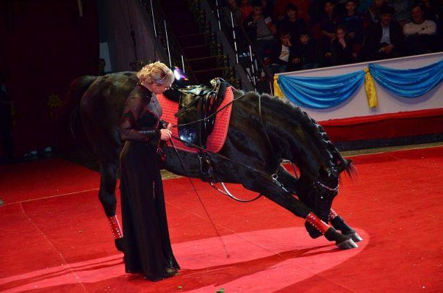 Конь Каравелл потряс зрителей зажигательным танцем