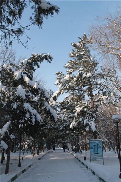 Зимний дендропарк - райское место для прогулок