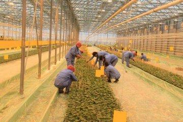 Чтобы получить субсидии, владелец хозяйства должен не только госакт на землю предоставить, но и убедить межведомственную комиссию (МВК), что его бизнес реально существует