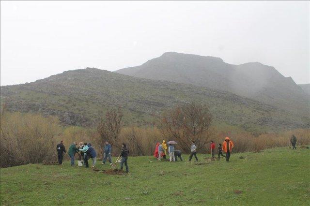 """Несмотря на проливной дождь молоденькие деревья появлялись на площадке как """"грибы после дождя"""""""
