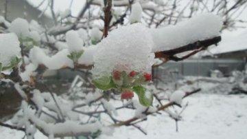Выпавший в Южном Казахстане снег повлиял на урожай